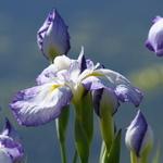 Flowers_3b