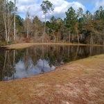 Pond Update