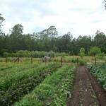 Spring Garden '09