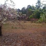 Fruit_orchard