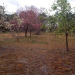 Fruit_orchard2