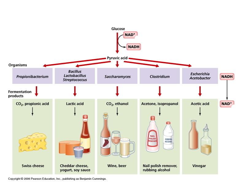 EXAMPLES; Fermentation