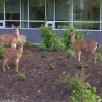 Uvic_wildlife