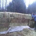 126_bails_of_donated_hay