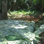 Mud blocks protected with banana leaves