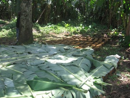 Mud blocks protected with banana leaves