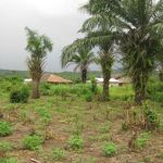 view of the 11.5 acres of land in gelehun