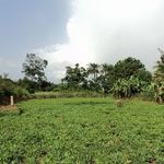 the land in Gelehun will house the future homes as we expand