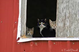 barn_cats.png