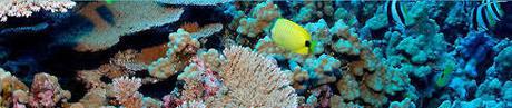 coral_calcium_banner.jpg