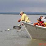 Catching a King  Salmon