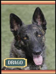 Drago Memorial