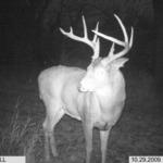 2010 Kansas Whitetail Tags!!