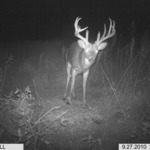 Whitetail Deer Applications!
