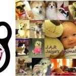 JAR - Jaiya's Animal Rescue