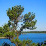 Georgian Bay 2013      (16).jpg