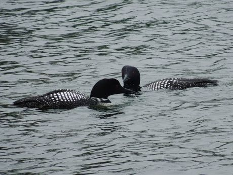 Georgian Bay 2013      (33).jpg