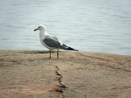 Georgian Bay 2013      (58).jpg