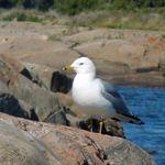 Georgian Bay 2013      (72).jpg