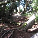 Cedar Shelter