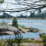 Through the Pine