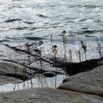 Water's Edge