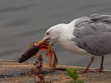 Sharing the Catch