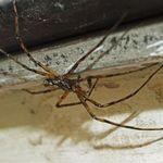 Spider - June 25