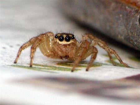 Spider - June 18