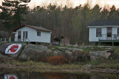 May 12 , 2011 - Moose