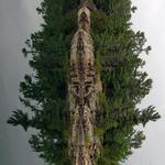 Totem Pole