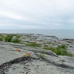 _Georgian_Bay_2011___151_.jpg