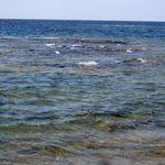 _Georgian_Bay_2011___188_.jpg