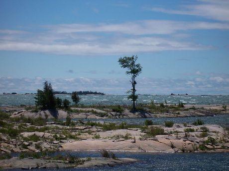 One Tree Windy Day
