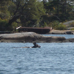 Swimming to Lookout island