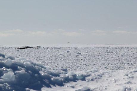 West Kiskadena Island - looking toward the Limestones