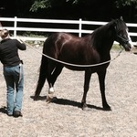 2014 - 06 Parelli Natural Horsemanship with Kim Kindred