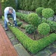 Garden_maintenance_topiary