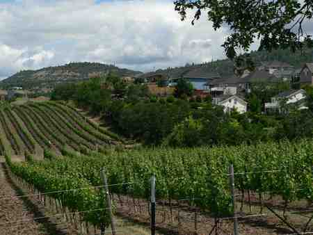 Advocacy_page_vineyard_and_houses