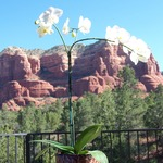Orchid_with_courthouse_butte