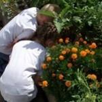 Cerbat Garden Club
