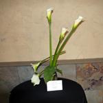 Nevada_floral_design