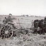 Rooting Out the Rutabagas, 1940