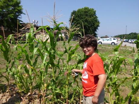 Proud gardener showing off corn