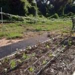 Support for garden
