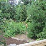 Garden OEC.jpg
