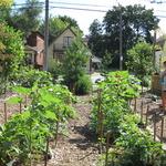 Look how our garden grows...