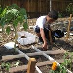 Square-foot Gardening Technique