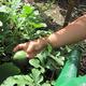 Pocket-Sized Farms 2010