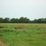 Walker Ranch (8).JPG